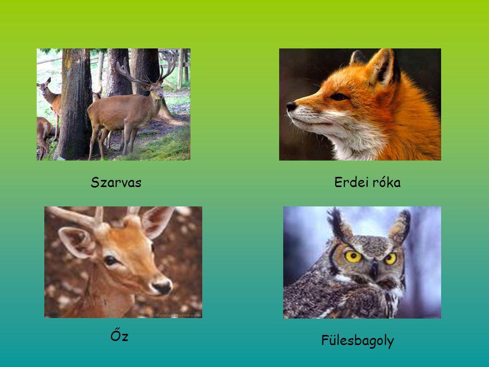 SzarvasErdei róka Őz Fülesbagoly