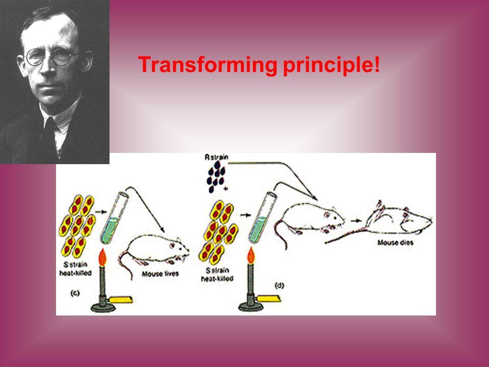 Transforming principle!