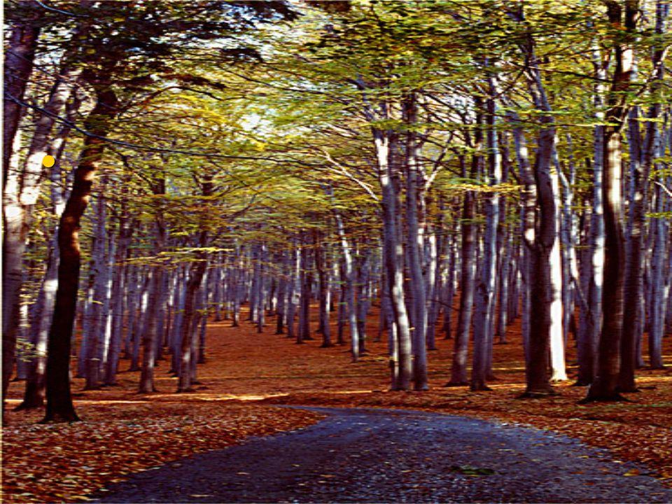 Látod a lényt a fák között?? Látod a lényt a fák között??