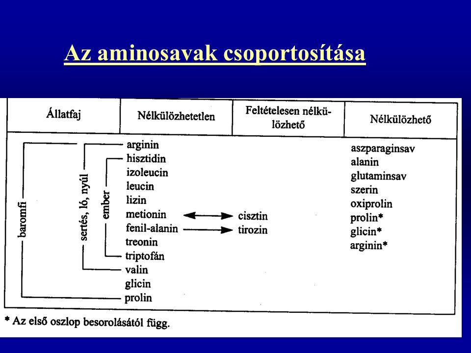Az aminosavak csoportosítása