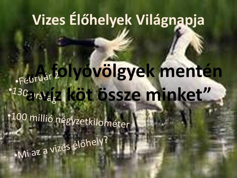 Ramsari területek Magyarországon o Miért jó.