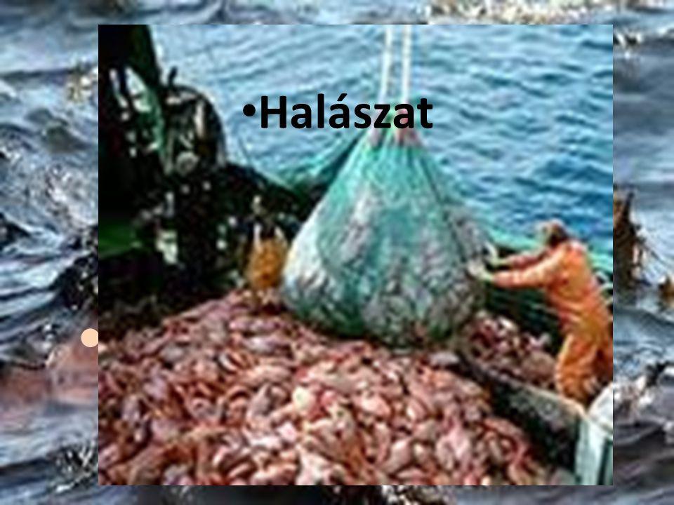 Mi a baj? Veszélyek akár a sportban is Halászat