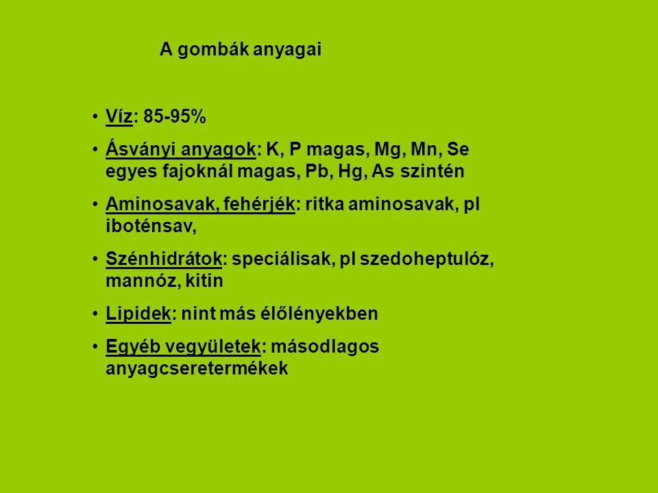 A gombák anyagai Víz: 85-95% Ásványi anyagok: K, P magas, Mg, Mn, Se egyes fajoknál magas, Pb, Hg, As szintén Aminosavak, fehérjék: ritka aminosavak,
