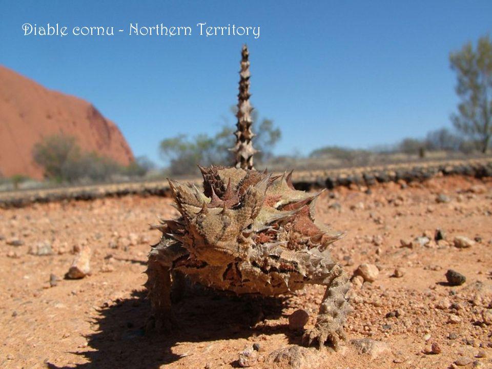 Les Olgas - Northern territory Az Olgák – Északi tartomány része. Félsivatagos táj Belső-Ausztráliában.