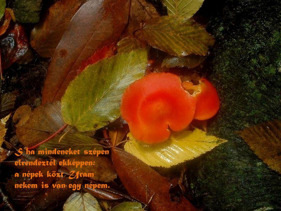 És legyen egy akol. És egy legyen a pásztor. Növelj pásztorbotot virágzó rózsafából.