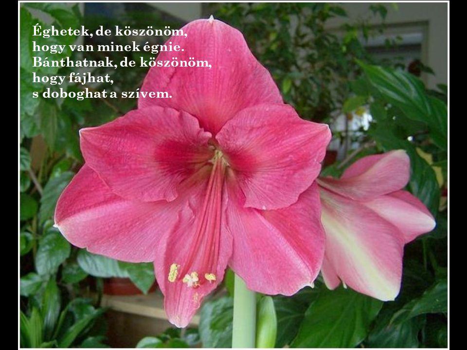 """"""" Istenem! Taníts engem szavaidra! Ültesd szívembe a hálát, virágozzon ajkamon a köszönöm!"""
