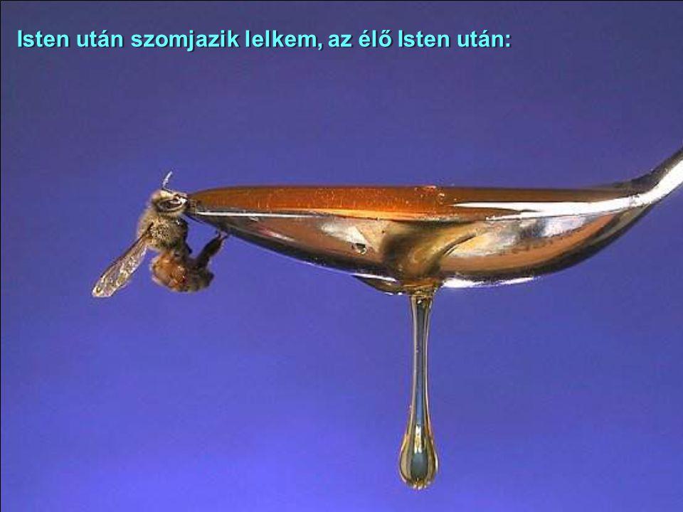 Ahogy a szarvas kívánkozik a folyóvízhez, úgy kívánkozik a lelkem hozzád, Istenem! Ahogy a szarvas kívánkozik a folyóvízhez, úgy kívánkozik a lelkem h