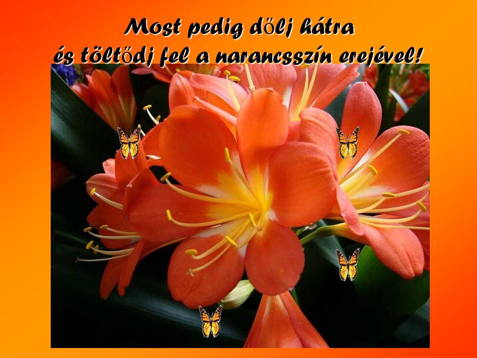 Narancssárga: - Öröm, Vitalitás és Életkedv! Szabadságra és mozgásra serkent! Vitalitása elűzi a depressziót. Fokozza az életerőt! Elősegíti a gyógyul