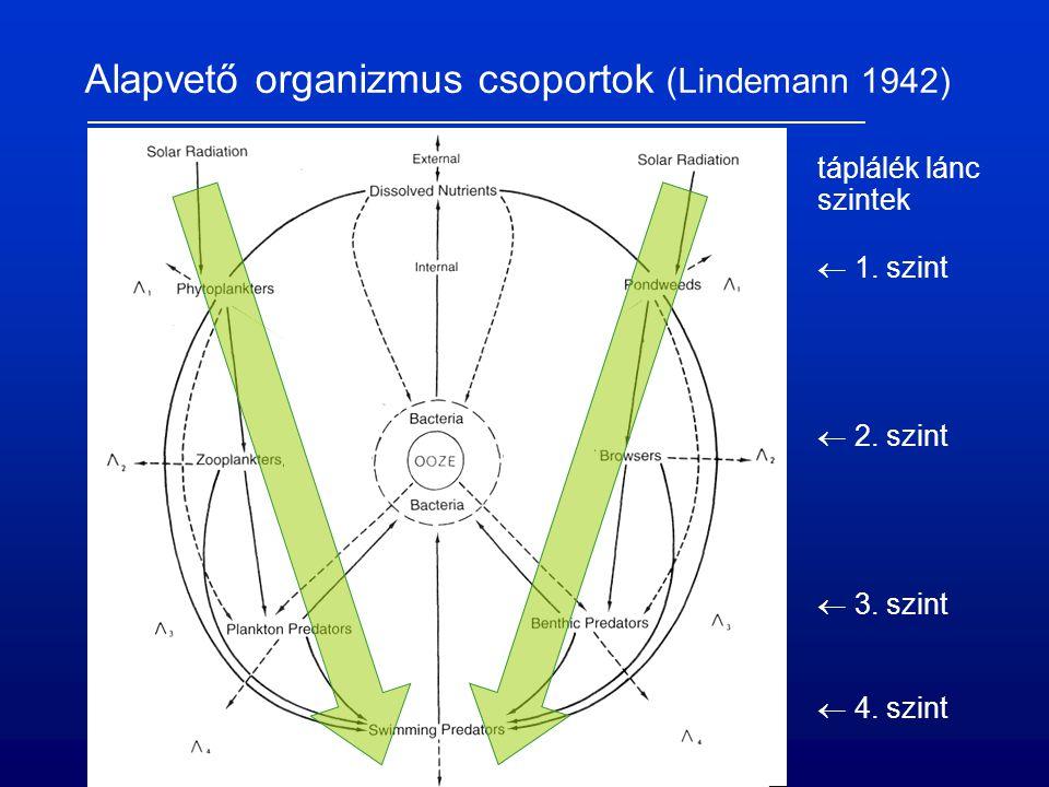 Alapvető organizmus csoportok (Lindemann 1942) táplálék lánc szintek  1. szint  2. szint  3. szint  4. szint