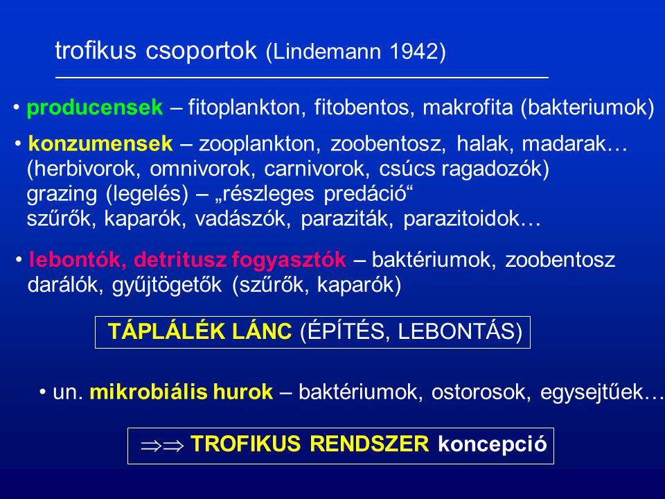 trofikus csoportok (Lindemann 1942) producensek – fitoplankton, fitobentos, makrofita (bakteriumok) konzumensek – zooplankton, zoobentosz, halak, ma