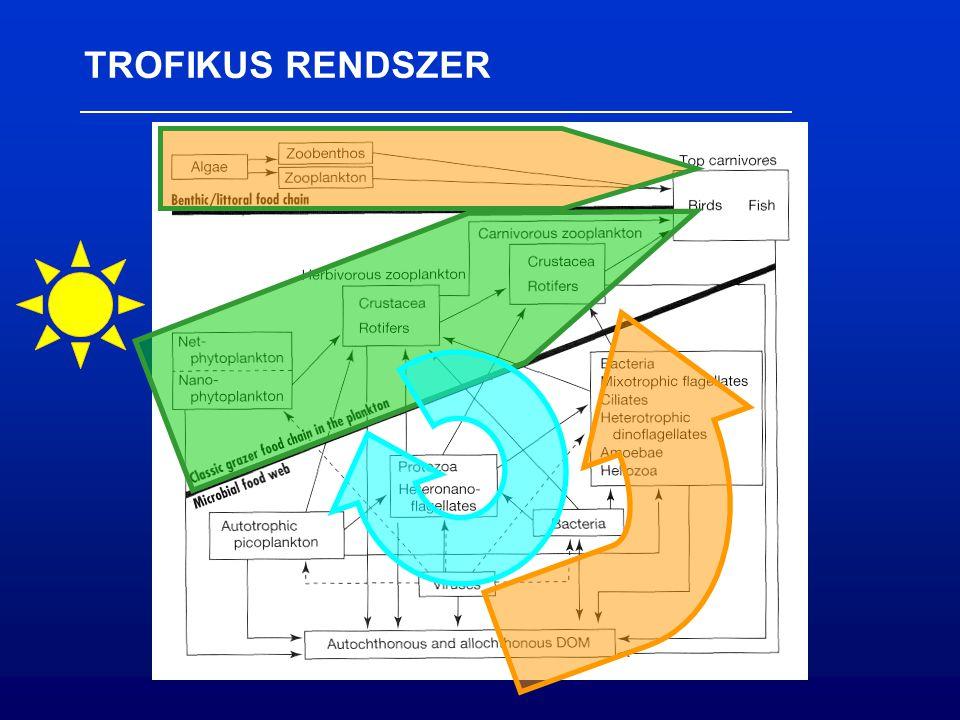 TROFIKUS RENDSZER