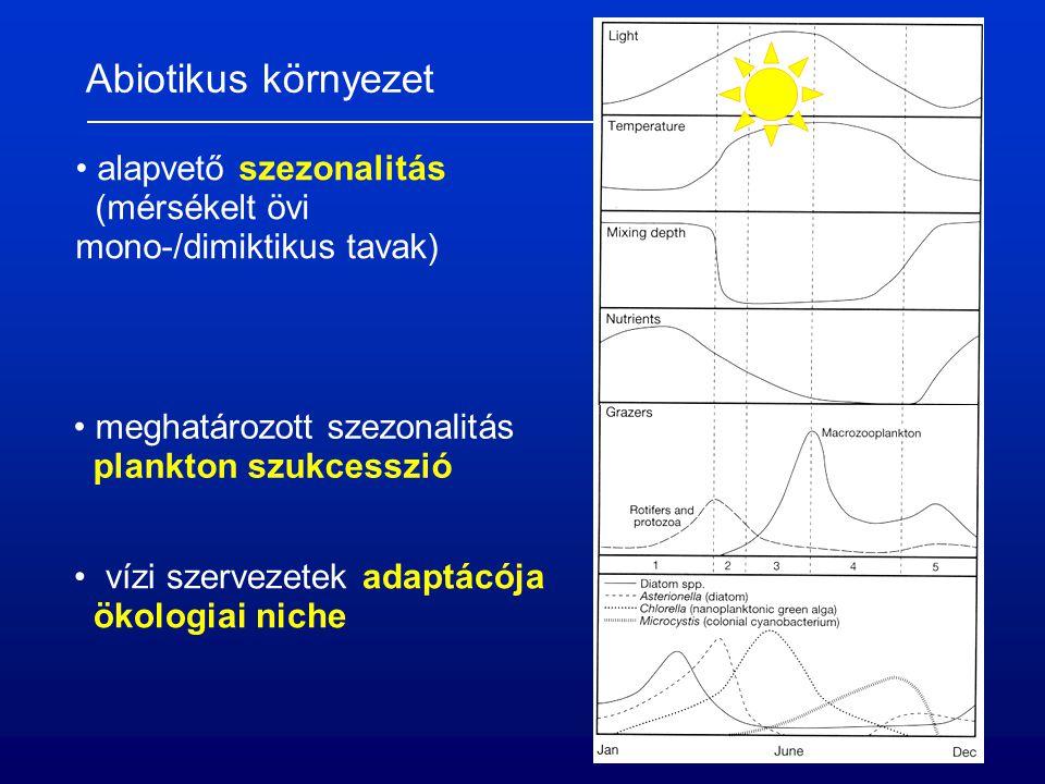 Fény, mint forrás, fotoszintézis 6 CO 2 + 6 H 2 O  C 6 H 12 O 6 + 6 O 2 – 2802 kJ térben és időben korlátozott (eufotikus réteg) elsődleges termelés mérése – sötét/világos palack módszer: O 2 : (net, NPP = P – R) 14 CO 2 : (gross, GPP)  kompenzációs pont