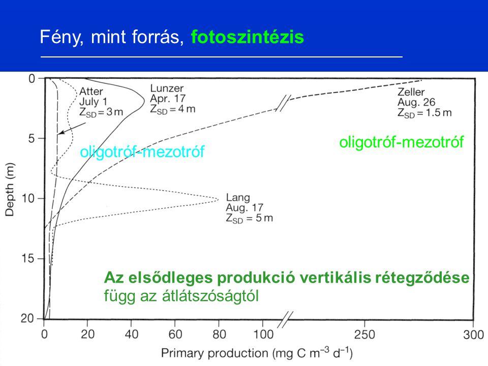 Az elsődleges produkció vertikális rétegződése függ az átlátszóságtól Fény, mint forrás, fotoszintézis oligotróf-mezotróf
