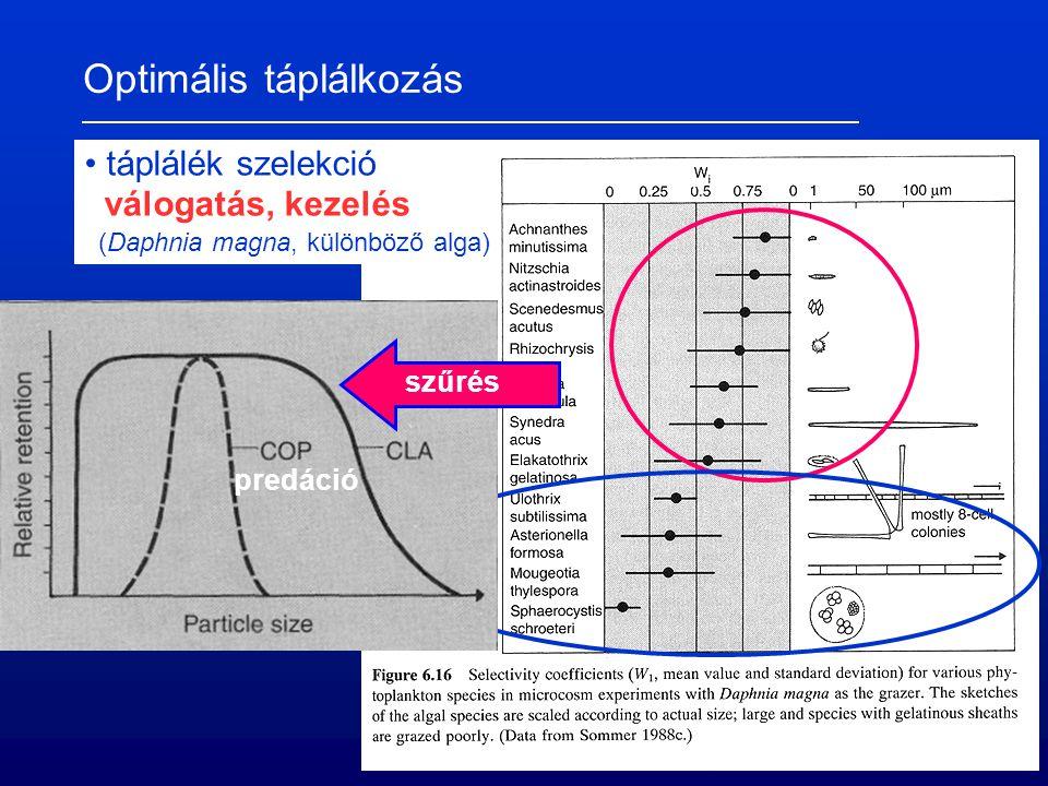Optimális táplálkozás táplálék szelekció válogatás, kezelés (Daphnia magna, különböző alga) szűrés predáció