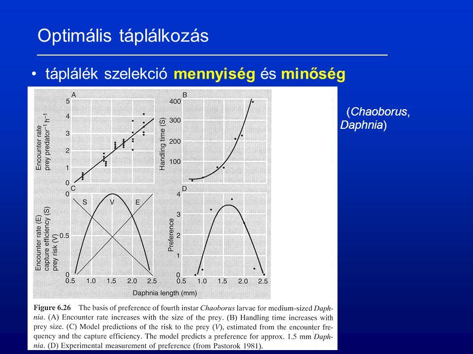 Optimális táplálkozás táplálék szelekció mennyiség és minőség (Chaoborus, Daphnia)