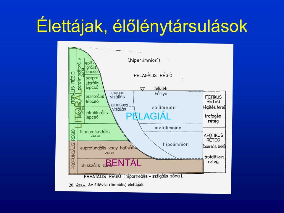 Pelagiál: Plankton (algák, kerekesférgek, egysejtűek stb.) Nekton (halak, vízi bogarak, poloskák stb.)