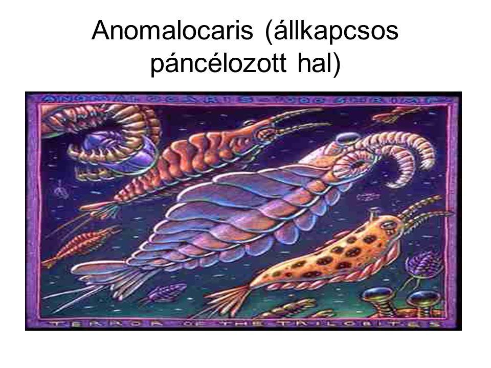 Anomalocaris (állkapcsos páncélozott hal)