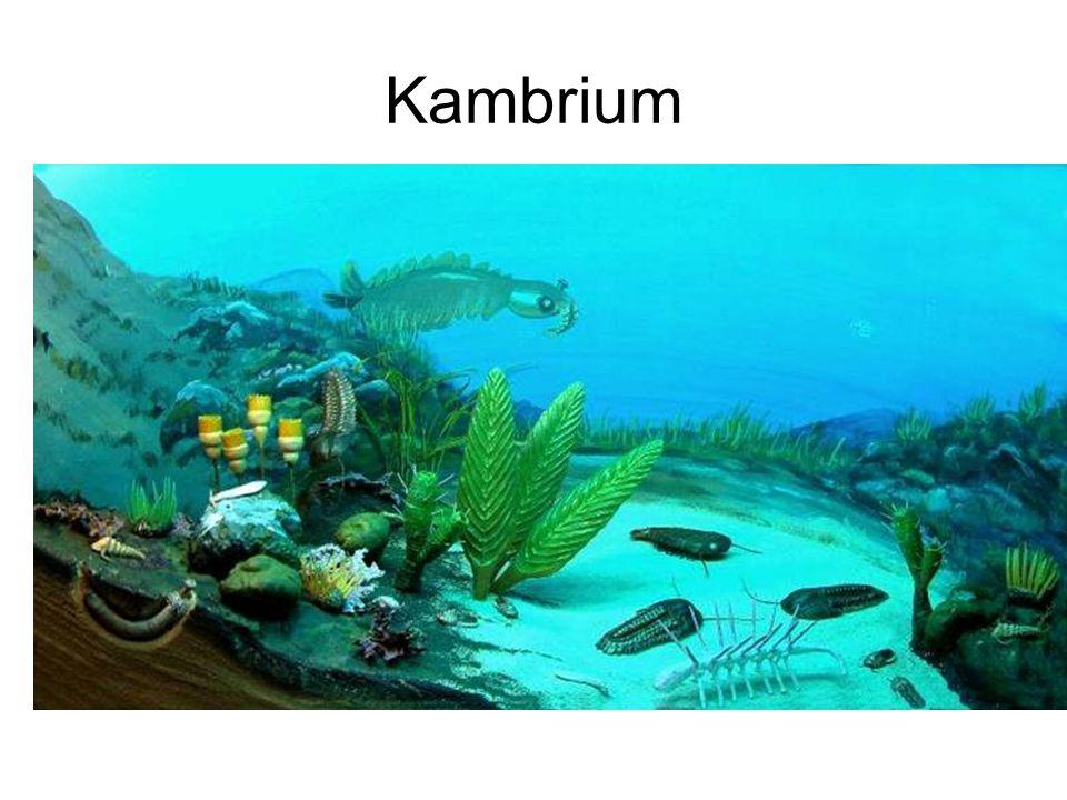 Kambrium