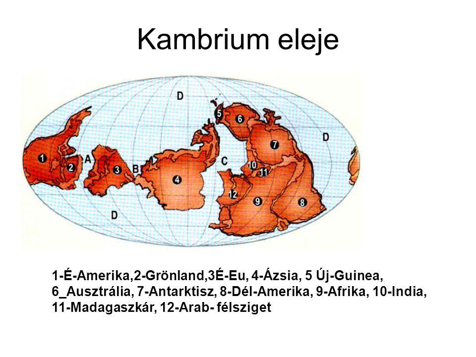 Kambrium eleje 1-É-Amerika,2-Grönland,3É-Eu, 4-Ázsia, 5 Új-Guinea, 6_Ausztrália, 7-Antarktisz, 8-Dél-Amerika, 9-Afrika, 10-India, 11-Madagaszkár, 12-A