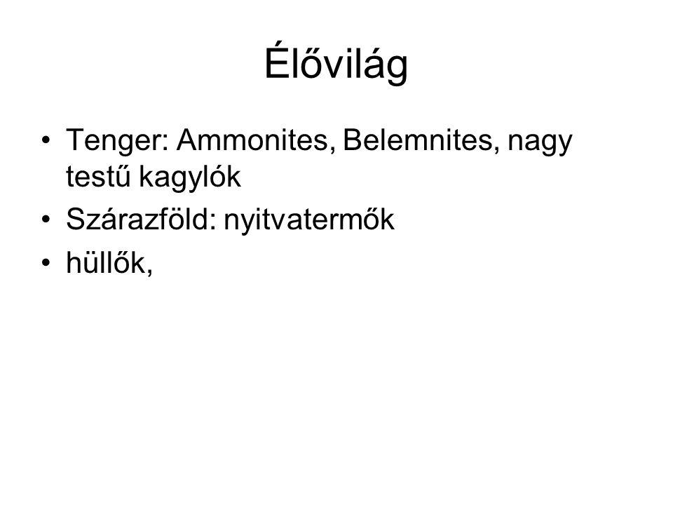 Élővilág Tenger: Ammonites, Belemnites, nagy testű kagylók Szárazföld: nyitvatermők hüllők,
