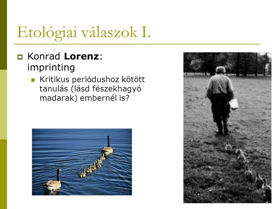 Etológiai válaszok I.  Konrad Lorenz: imprinting Kritikus periódushoz kötött tanulás (lásd fészekhagyó madarak) embernél is?
