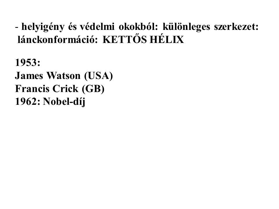 - helyigény és védelmi okokból: különleges szerkezet: lánckonformáció: KETTŐS HÉLIX 1953: James Watson (USA) Francis Crick (GB) 1962: Nobel-díj
