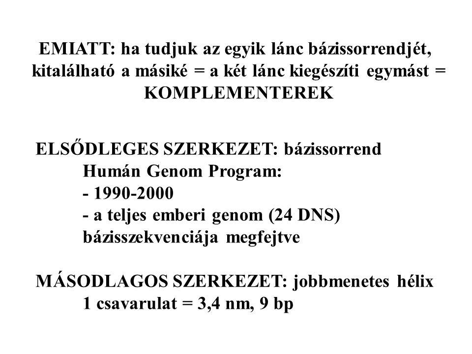 EMIATT: ha tudjuk az egyik lánc bázissorrendjét, kitalálható a másiké = a két lánc kiegészíti egymást = KOMPLEMENTEREK ELSŐDLEGES SZERKEZET: bázissorrend Humán Genom Program: - 1990-2000 - a teljes emberi genom (24 DNS) bázisszekvenciája megfejtve MÁSODLAGOS SZERKEZET: jobbmenetes hélix 1 csavarulat = 3,4 nm, 9 bp
