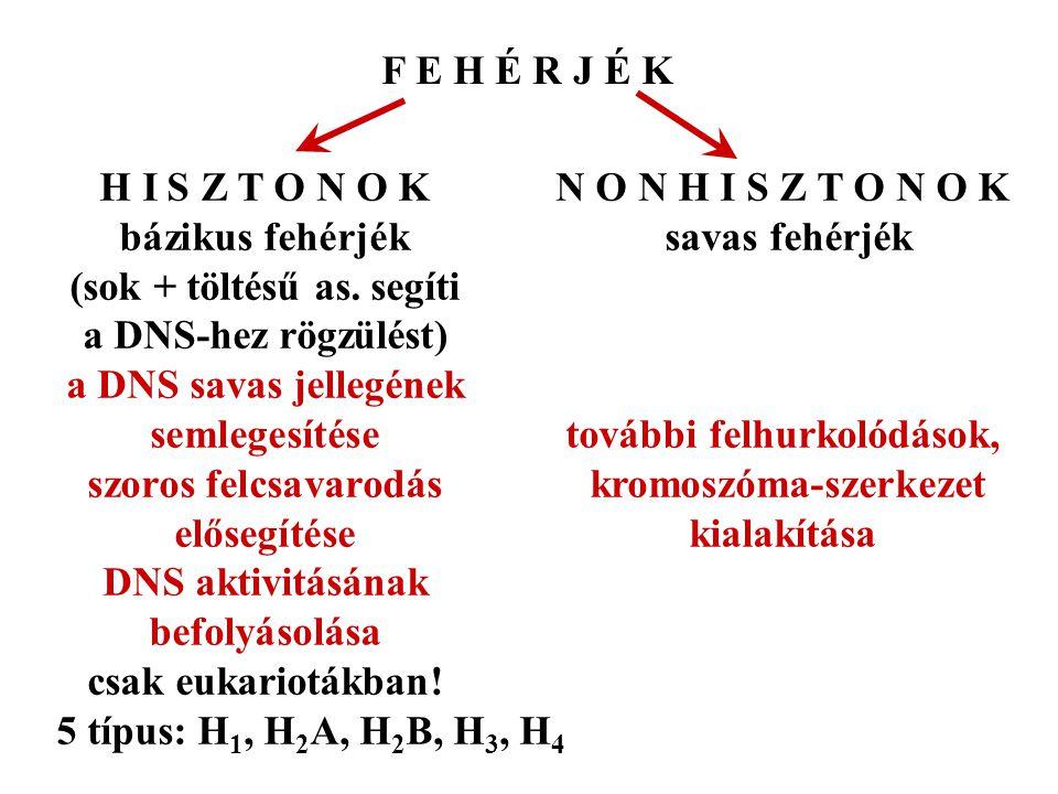 elektronmikroszkópban: gyöngysorszerű szerkezet nukleoszóma = hisztonok + 2 csavarulat DNS nukleoszóma a DNS szerkezeti egysége [a hisztonok iszonyú konzervatív fehérjék: az evolúció során alig változtak - pl.