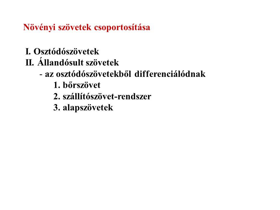 Növényi szövetek csoportosítása I.Osztódószövetek II.