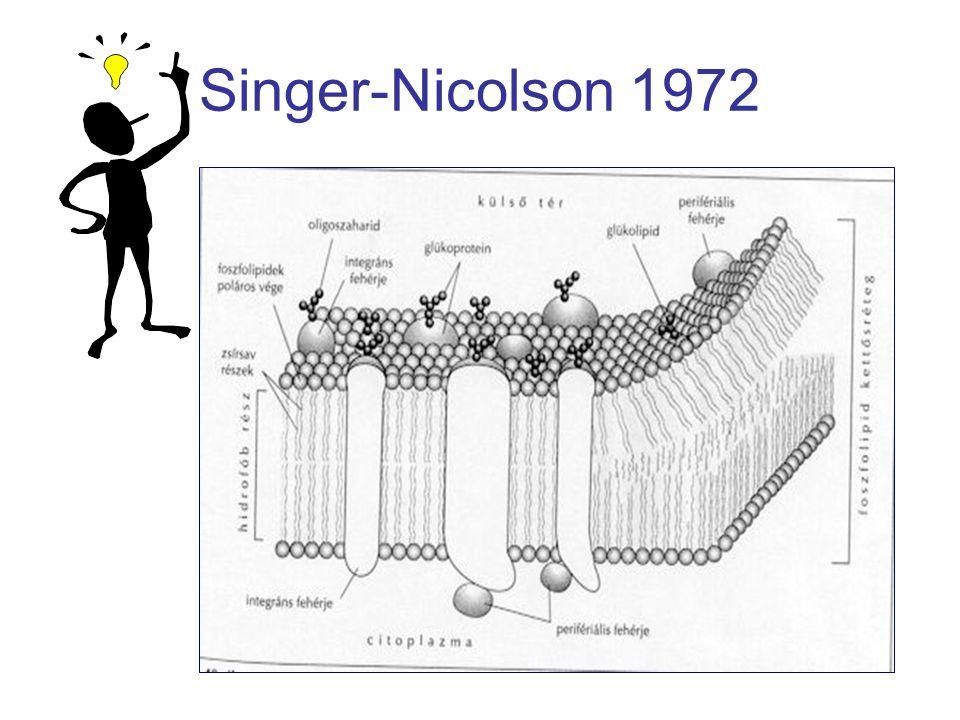 Singer-Nicolson 1972