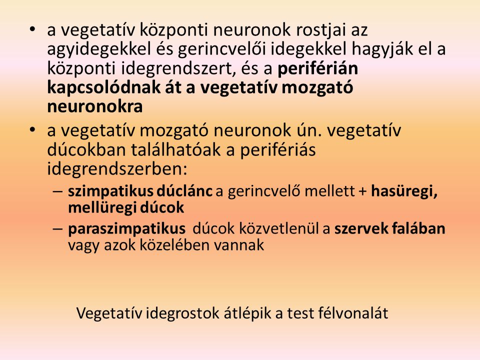 a vegetatív központi neuronok rostjai az agyidegekkel és gerincvelői idegekkel hagyják el a központi idegrendszert, és a periférián kapcsolódnak át a