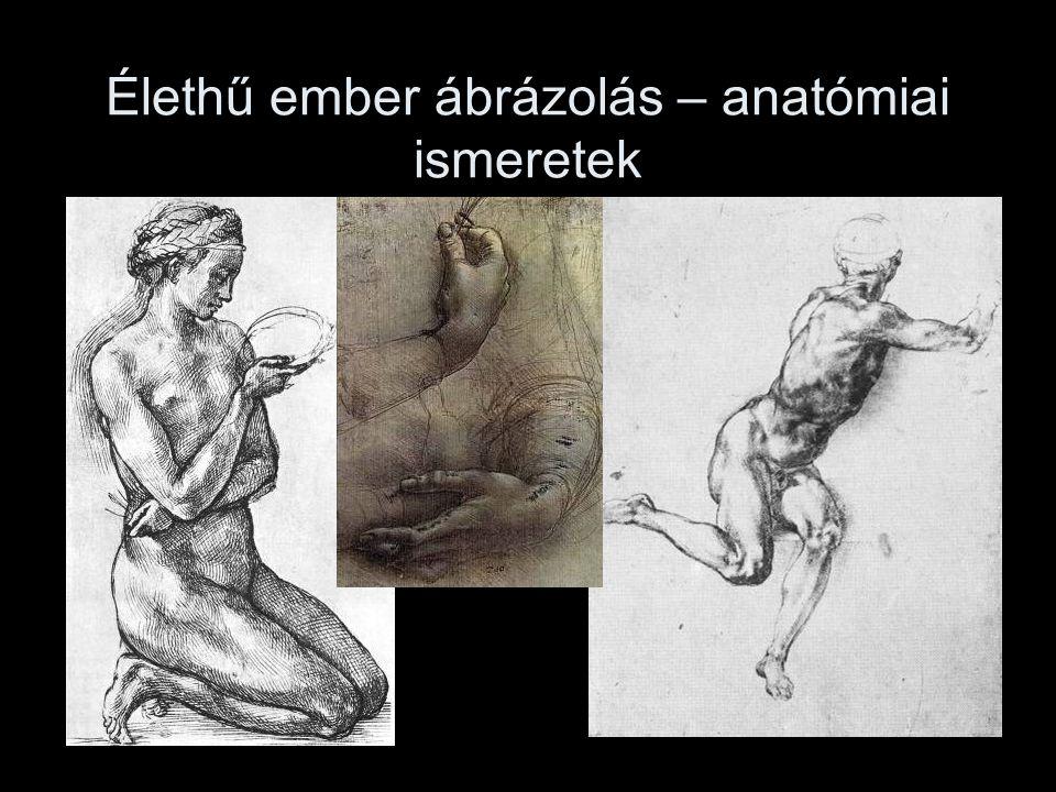 Élethű ember ábrázolás – anatómiai ismeretek