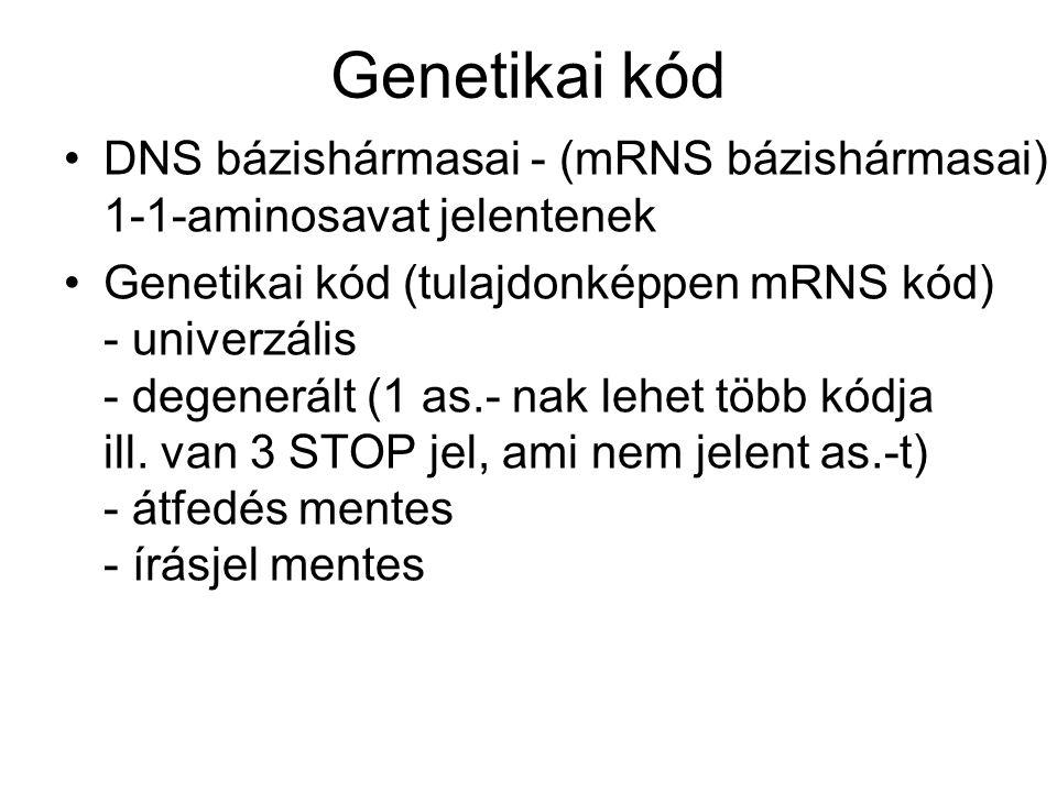 Genetikai kód DNS bázishármasai - (mRNS bázishármasai) 1-1-aminosavat jelentenek Genetikai kód (tulajdonképpen mRNS kód) - univerzális - degenerált (1 as.- nak lehet több kódja ill.