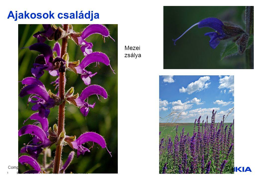 Company Confidential © 2008 Nokia V1-Filename.ppt / YYYY-MM-DD / Initials 12 Kocsányos tölgy Kocsánytalan tölgy