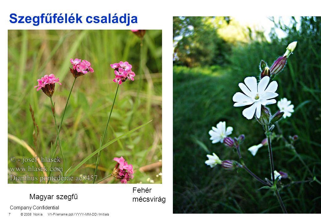 Company Confidential © 2008 Nokia V1-Filename.ppt / YYYY-MM-DD / Initials 8 Nyírfafélék családja Mogyoró Gyertyán