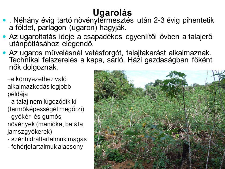 Ugarolás. Néhány évig tartó növénytermesztés után 2-3 évig pihentetik a földet, parlagon (ugaron) hagyják. Az ugaroltatás ideje a csapadékos egyenlítő