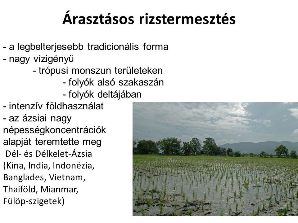 Árasztásos rizstermesztés - a legbelterjesebb tradicionális forma - nagy vízigényű - trópusi monszun területeken - folyók alsó szakaszán - folyók delt