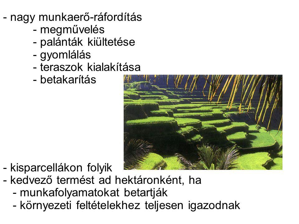 - nagy munkaerő-ráfordítás - megművelés - palánták kiültetése - gyomlálás - teraszok kialakítása - betakarítás - kisparcellákon folyik - kedvező termé