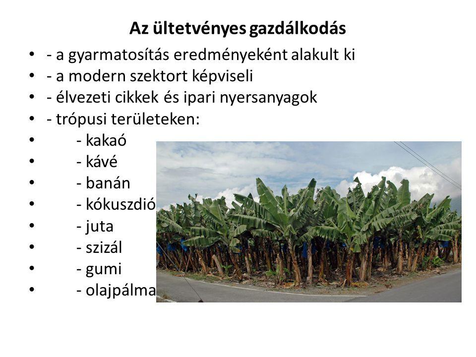 Az ültetvényes gazdálkodás - a gyarmatosítás eredményeként alakult ki - a modern szektort képviseli - élvezeti cikkek és ipari nyersanyagok - trópusi