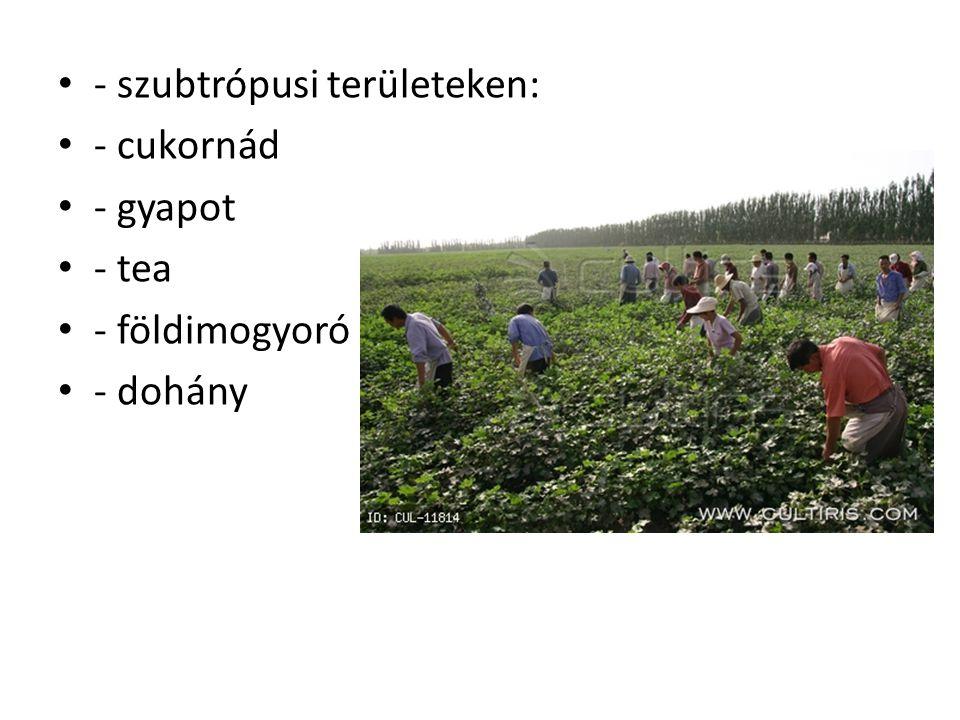 - szubtrópusi területeken: - cukornád - gyapot - tea - földimogyoró - dohány