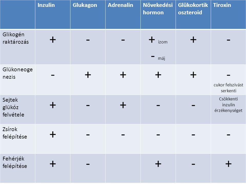 InzulinGlukagonAdrenalinNövekedési hormon Glükokortik oszteroid Tiroxin Glikogén raktározás +--+ izom - máj +- Glükoneoge nezis -++++- cukor felszívás