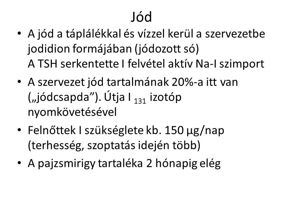 Jód A jód a táplálékkal és vízzel kerül a szervezetbe jodidion formájában (jódozott só) A TSH serkentette I felvétel aktív Na-I szimport A szervezet j
