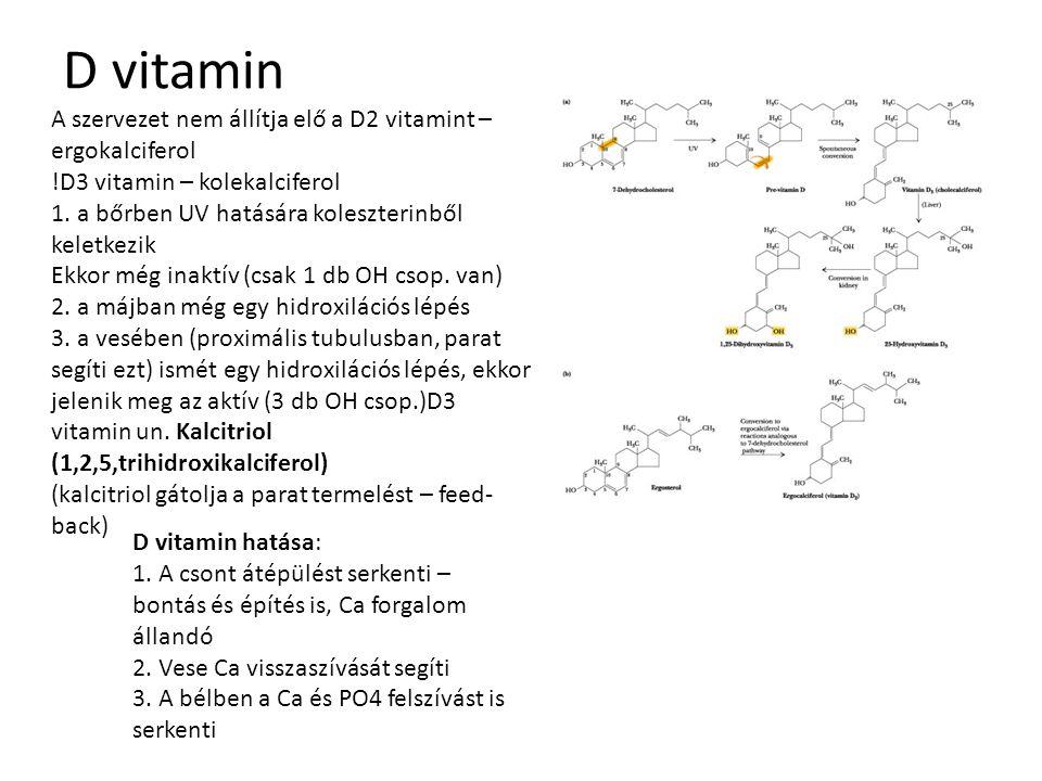 D vitamin A szervezet nem állítja elő a D2 vitamint – ergokalciferol !D3 vitamin – kolekalciferol 1. a bőrben UV hatására koleszterinből keletkezik Ek