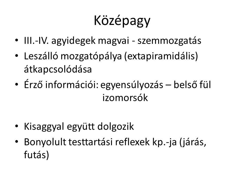 Középagy III.-IV.