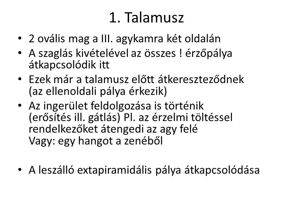 1.Talamusz 2 ovális mag a III. agykamra két oldalán A szaglás kivételével az összes .