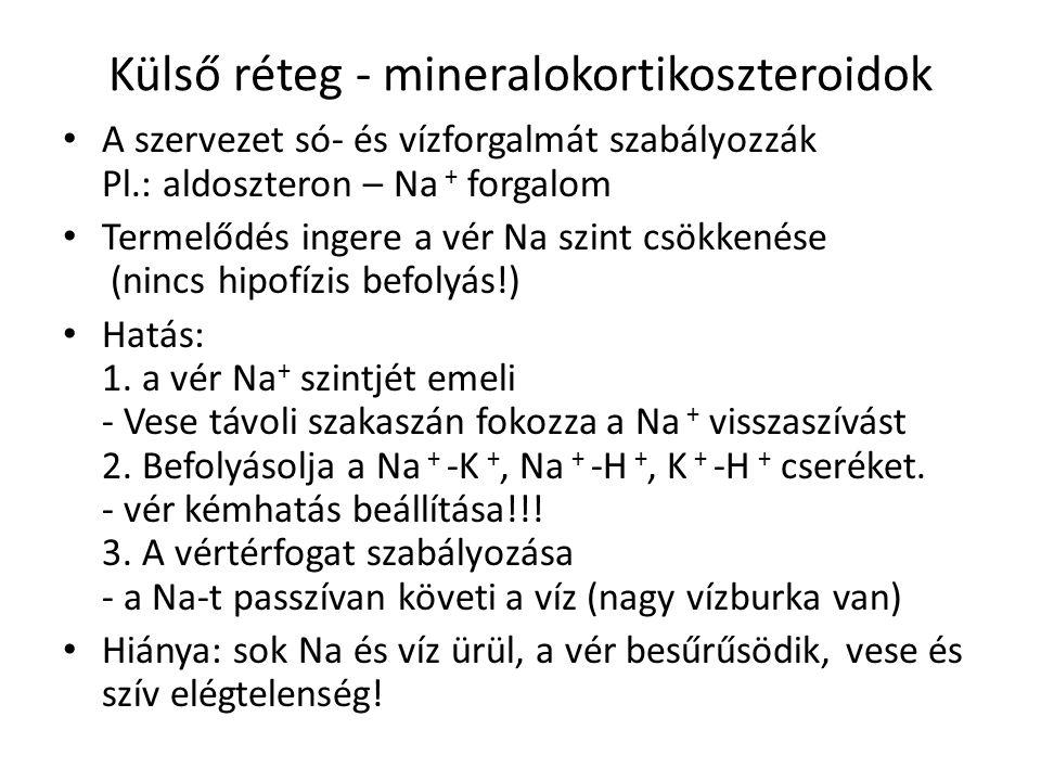 Külső réteg - mineralokortikoszteroidok A szervezet só- és vízforgalmát szabályozzák Pl.: aldoszteron – Na + forgalom Termelődés ingere a vér Na szint csökkenése (nincs hipofízis befolyás!) Hatás: 1.