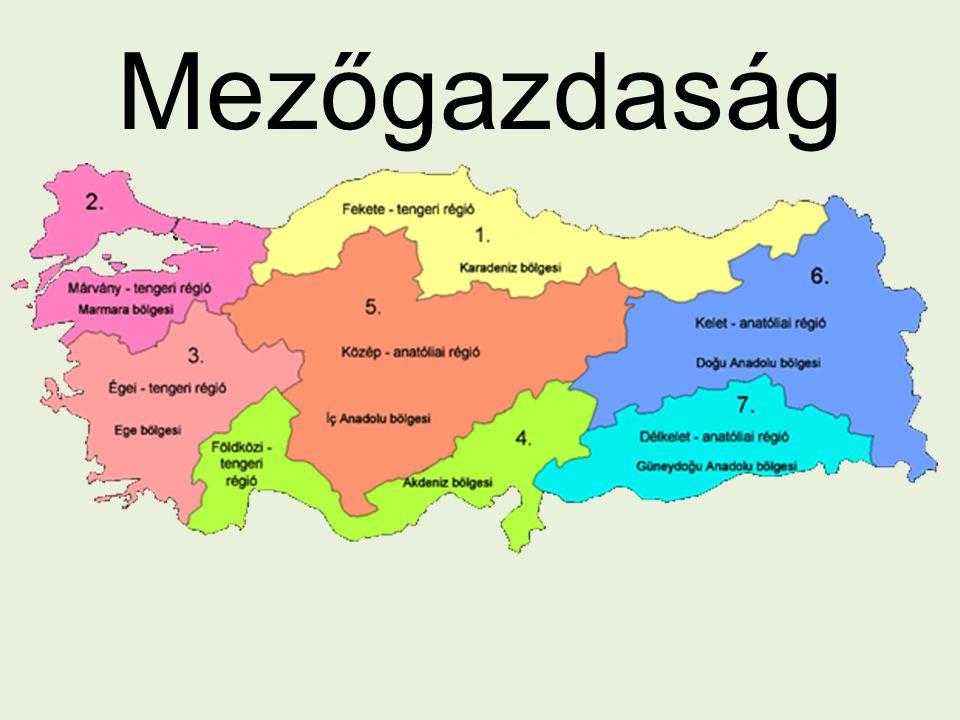Fekete-tengeri régió Magas hegyoldalak Folyók – vízenergia Ny—K partvonal: dohány, mogyoró, tea Szénbányászat Nehézipar
