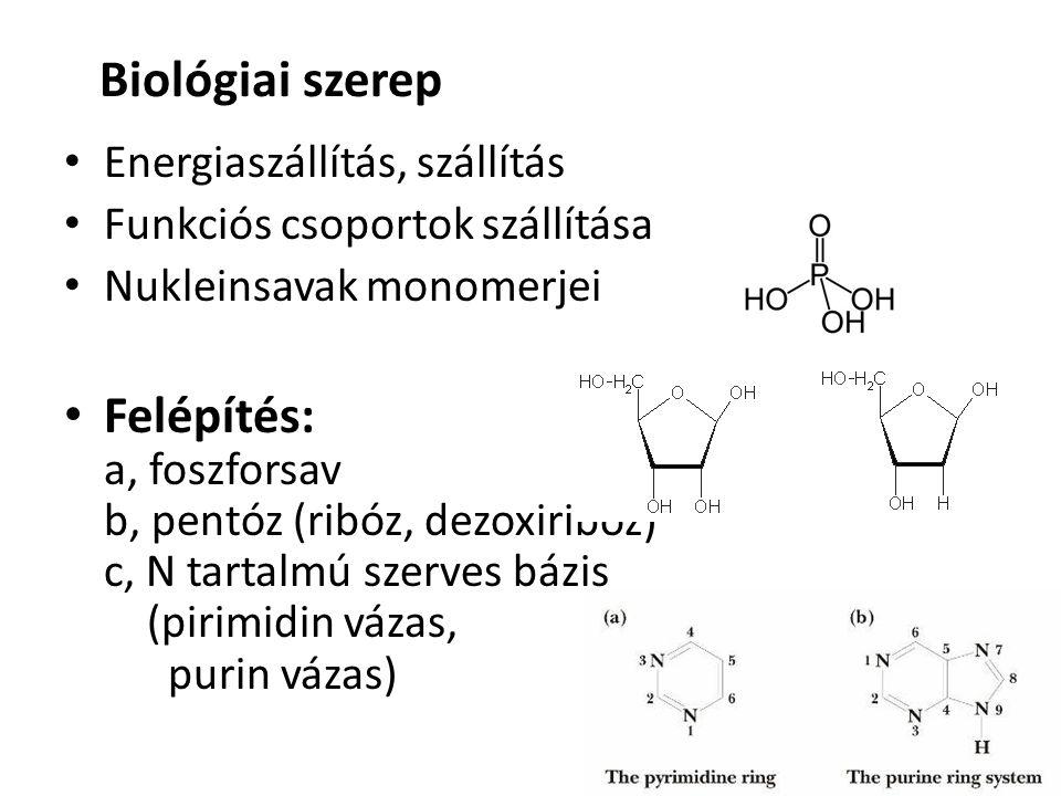 Biológiai szerep Energiaszállítás, szállítás Funkciós csoportok szállítása Nukleinsavak monomerjei Felépítés: a, foszforsav b, pentóz (ribóz, dezoxiribóz) c, N tartalmú szerves bázis (pirimidin vázas, purin vázas)
