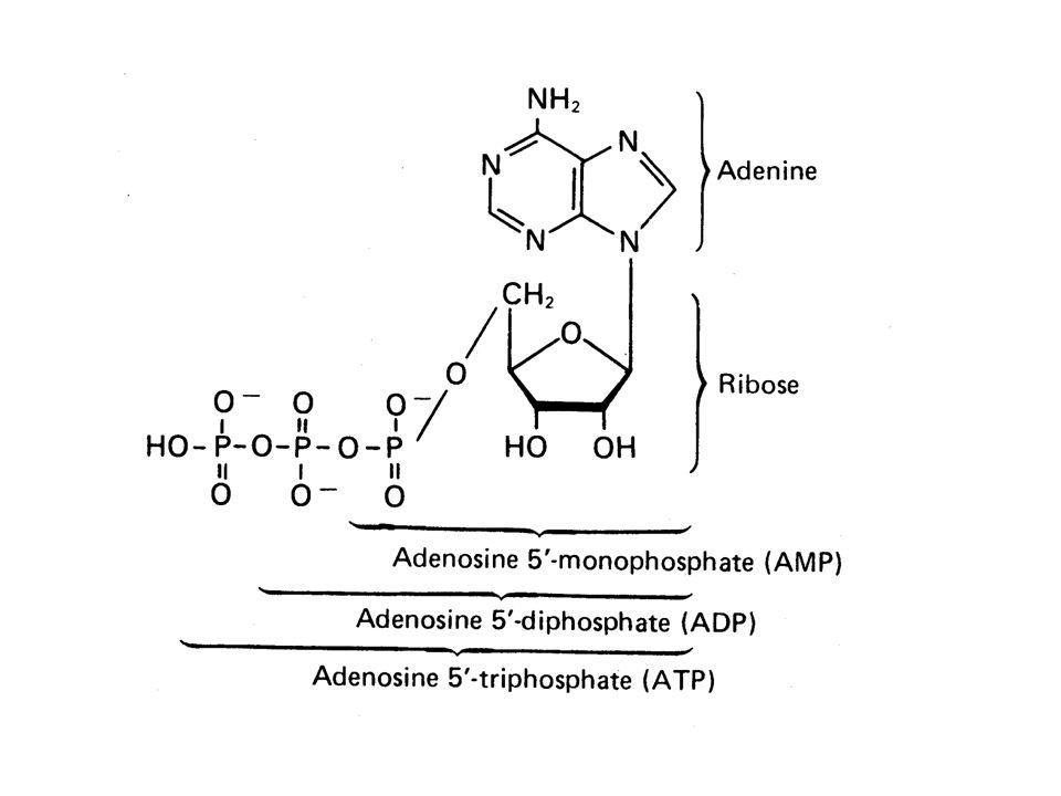Nukleinsavak monomerjei 1.