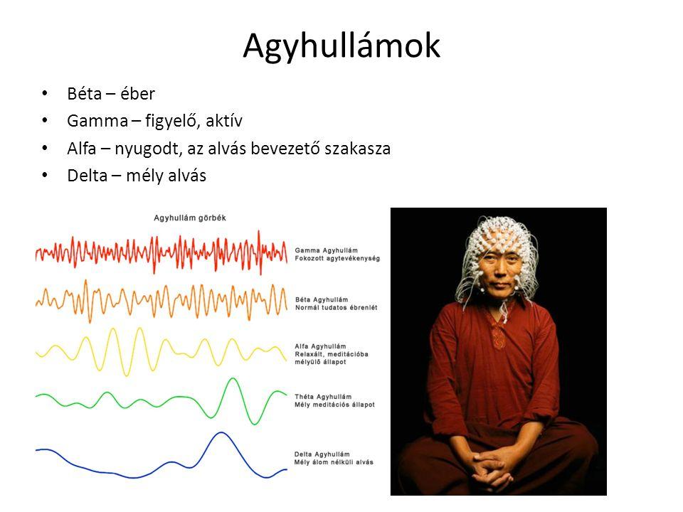 Agyhullámok Béta – éber Gamma – figyelő, aktív Alfa – nyugodt, az alvás bevezető szakasza Delta – mély alvás